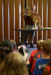 Gabe Kerschner, with the Wild Things program, teaches a large crowd about Hularoo the kangaroo during a presentation at the Carson City Library, in Carson City, Nev., on Wednesday, July 30, 2014.<br /> Photo by Cathleen Allison