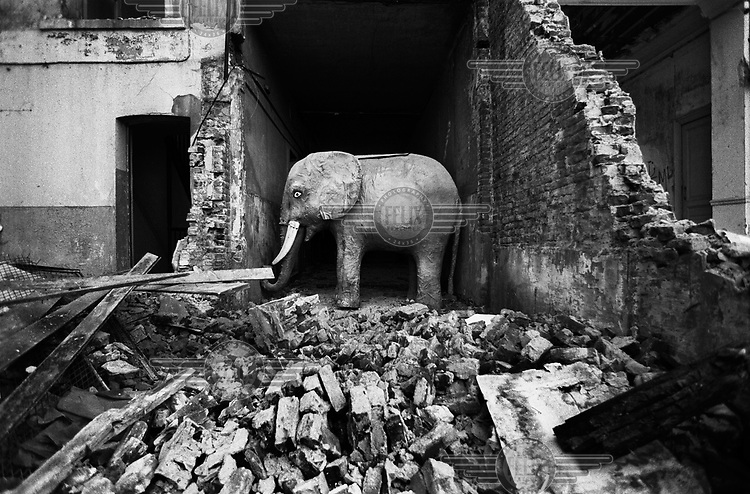 A statue of an elephant in a demolished part of the old Cote d'Or chocolate factory in the centre of Brussels.