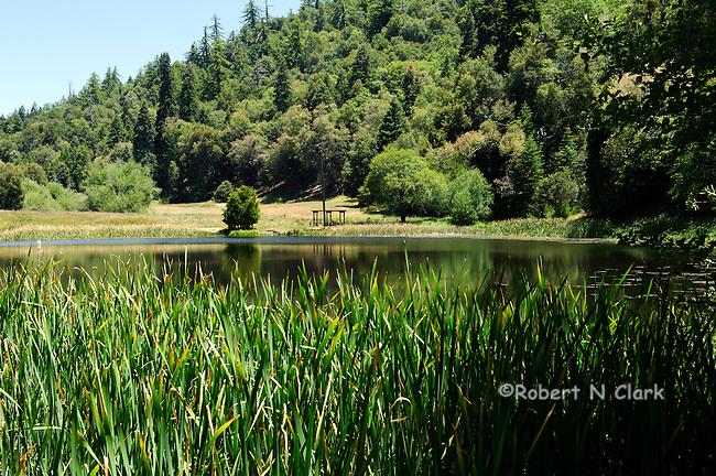 Doane Pond trout fishing