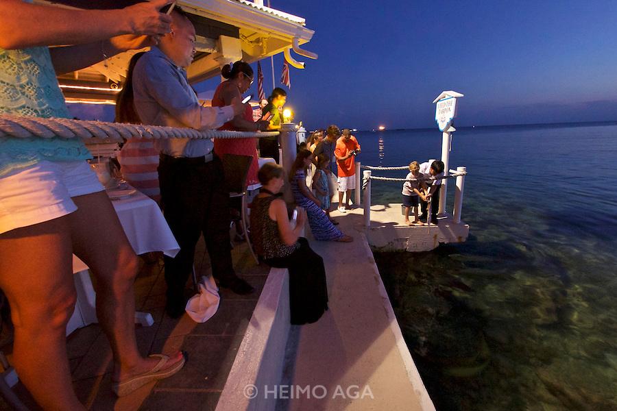 Grand Cayman. The Wharf restaurant. Daily Tarpon feeding.
