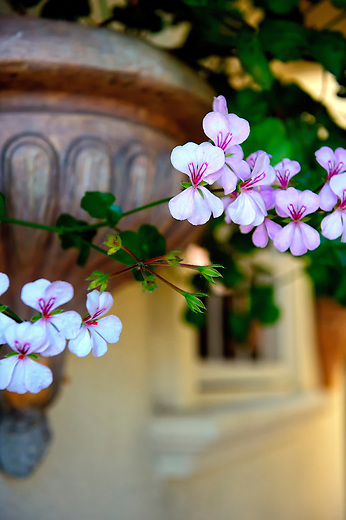 Hanging pink flowers