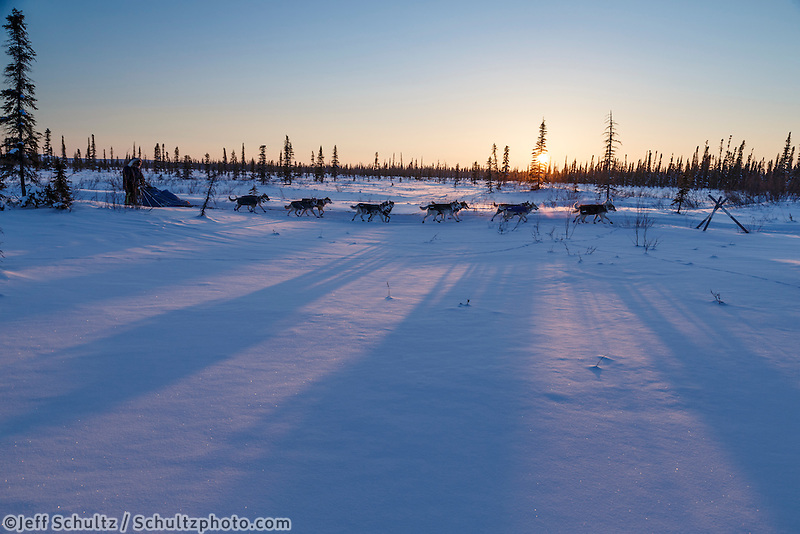 Lev Shvarts runs on the trail near sunset a few miles before the Huslia checkpoint on Saturday  March 14, 2015 during Iditarod 2015.  <br /> <br /> (C) Jeff Schultz/SchultzPhoto.com - ALL RIGHTS RESERVED<br />  DUPLICATION  PROHIBITED  WITHOUT  PERMISSION