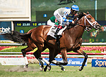 HALLANDALE BEACH, FL - March 3: Maraud, #2, with John Velazquez in the irons for trainer Todd Pletcher, wins the Grade III Palm Beach Stakes at Gulfstream on March 3, 2018 in Hallandale Beach, FL. (Photo by Carson Dennis/Eclipse Sportswire/Getty Images.)
