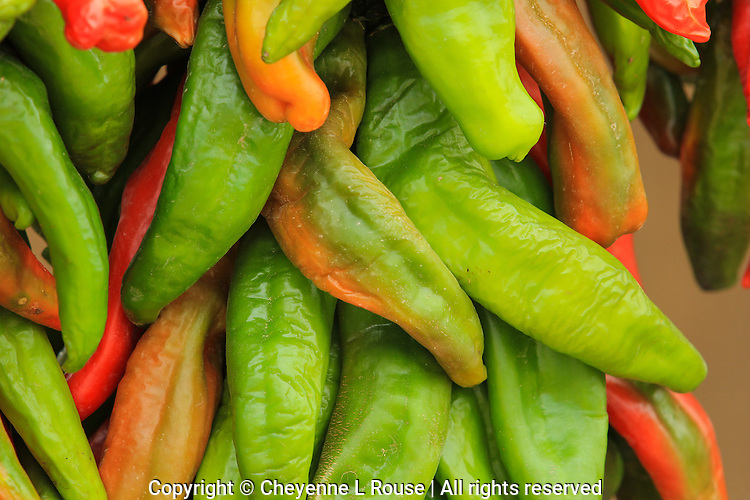 Hot Hot Hot! Hatch Chile Peppers - New Mexico