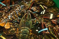 Live lobster in seafood market.