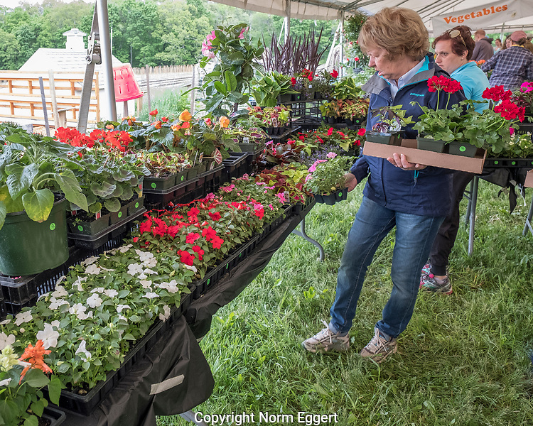 Customers shopping for garden plants in the spring