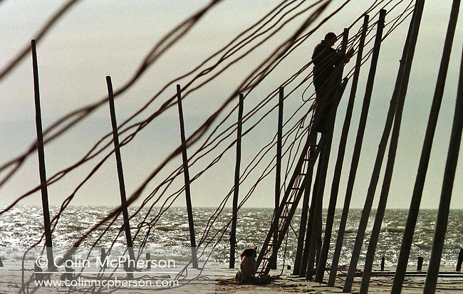 A fisherman at St. Cyrus in Aberdeenshire setting up stake nets at the beginning of the season on the beach to catch wild Atlantic salmon and sea trout between April and August. In 1998 the fishery discontinued the use of labour-intensive stake nets when the company which owned the fishery sold the fishing rights. The once-thriving Scottish salmon netting industry fell into decline in the 1970s and 1980s when the numbers of fish caught reduced due to environmental and economic reasons. By 2007, only a handful of men still caught wild salmon and sea trout using traditional methods, mainly for export to the Continent.