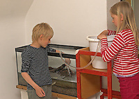 Kinder richten ein Aquarium ein, Schritt 5, Wasser wird mit einem Schlauch ins Glasbecken eingefüllt