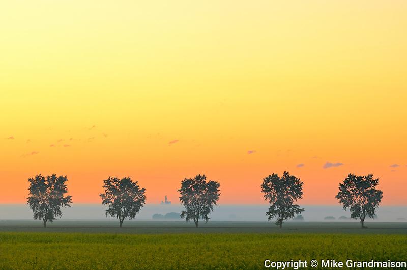 Shelterbelt trees in fog at sunrise<br /> Fannystelle<br /> Manitoba<br /> Canada