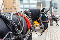 New York, NY - 31 March 2016 - Dante, a black carriage horse awaits customers on Central Park South . ©Stacy Walsh Rosenstock