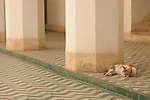 A cat sleeps in a courtyard in the Bahia Palace in Marrakesh, Morocco.