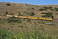 Europe/France/Languedoc-Roussillon/66/Pyrénées-Orientales/Cerdagne/Env de Saillagouse:  Traversant les paturages du plateau cerdan au Col Rigat, avec en fond: Font-Romeu-Odeillo-Via,  le Train jaune de Cerdagne appelé le Train Jaune ou le Canari, car les véhicules arborent les couleurs catalanes, le jaune et le rouge. relie la gare de Villefranche - Vernet-les-Bains à celle de Latour-de-Carol - Enveigt via Font-Romeu en suivant la vallée de la Têt puis en parcourant le plateau de Cerdagne.