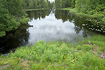 Small Lake, Kuhmo, Finland, Lentiira, Vartius near Russian Border