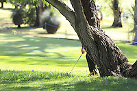 Edoardo Molinari (ITA) plays from behind a tree on the 1st during Round 1 of the ISPS HANDA Perth International at the Lake Karrinyup Country Club on Thursday 23rd October 2014.<br /> Picture:  Thos Caffrey / www.golffile.ie