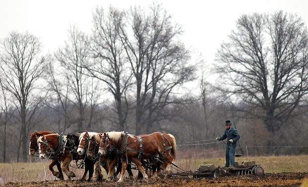 An Amish farmer rides a disc plow drawn by six horses west of Drakesville in southeast Iowa's Davis County.   It is among only a handful of rural Iowa counties in the 2010 Census to gain population (2.4 percent).  Much of that population growth is due to a steadily growing Amish population.  (Christopher Gannon/The Des Moines Register)