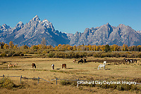 67545-09604 Horses and Grand Teton Mountain Range in fall, Grand Teton National Park, WY