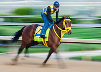 April 30, 2014: Kentucky Derby contender Wildcat Red, trained by Jose Garrofalo, exercises on the backside of Churchill Downs during Dawn at the Downs in Louisville, Kentucky.  Logan Riely/ESW/CSM