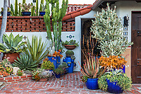 Group of succulents with Agave 'blue glow' on left and Euphorbia ingens, tall succulent in pot by entry garden and front door;  Jim Bishop and Scott Borden garden
