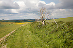 Pathway over chalk downland landscape upland scenery All Cannings Down, near East Kennet, Wiltshire, England cumulus clouds