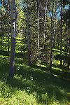 Trees & Meadows near Pilot Pond, Bow Valley, Banff NP, Canada