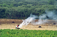 View over the vineyard. The farther vineyard where the vines have been pulled up for replanting. Two men are working on burning the pulled up vines making fires with smoke. In front vineyard with vines  Chateau Mont-Redon, Chateauneuf-du-Pape Châteauneuf, Vaucluse, Provence, France, Europe