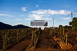 BAJA CALIFORNIA - NOVEMBER 26, 2013:  L.A. Cetto is one of the largest wineries in Baja California's Valle de Guadalupe wine region is a popular tourist destination. Residents and wineries in Mexico's wine country are protesting the mayor's relaxing of zoning regulations they say will lead to a drastic change in the culture of  the popular tourist destination.  CREDIT: Max Whittaker for The New York Times