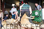 Sheep shearer in action at the annual Top of Coom Sheep shearing on Sunday last.