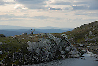 Wild reindeer,Forollhogna,Norway