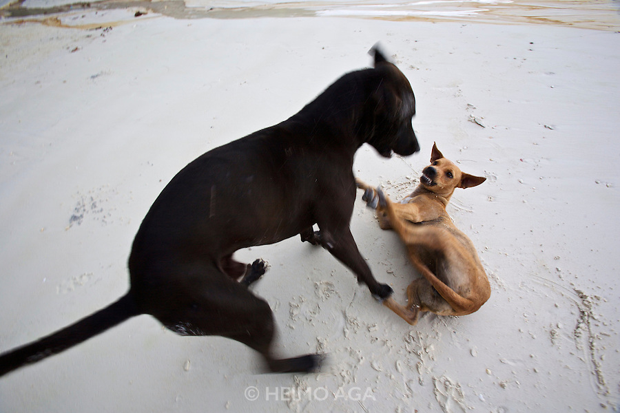 Put and his blonde girlfriend having a mock fight..