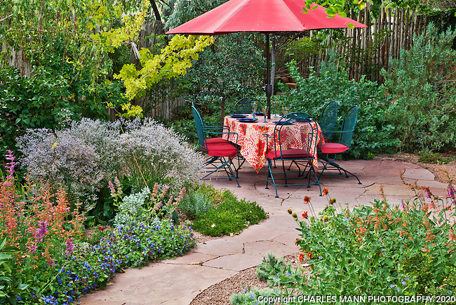 Holly Kinley has designed and made a  pretty back yard garden with an orange colored accent wall  centered around a large cottonwood tree and a flagstone patio.