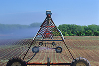 irrigating crop