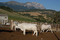 "Azienda Agricola Martinelli. L'azienda ha sede in Abruzzo nel Parco Nazionale Gran Sasso e Monti della Laga. .Caseificio per la produzione del ""Pecorino di Farindola"". L' azienda dispone di una superficie di oltre 240 ettari di terreni destinati alle coltivazioni biologiche ed agli allevamenti zootecnici con oltre 1200 capi ovini e oltre 300 bovini di razza marchigiana..Martinelli Farm. The company is based in Abruzzo the National Park Gran Sasso and Monti della Laga. .Dairy Factory for the production of cheese ""Pecorino di Farindola""..The company has an area of more than 240 hectares of land for crops and biological livestock farms with more than 1200 heads of sheep and beyond 300 cattle race Marchighiana.."