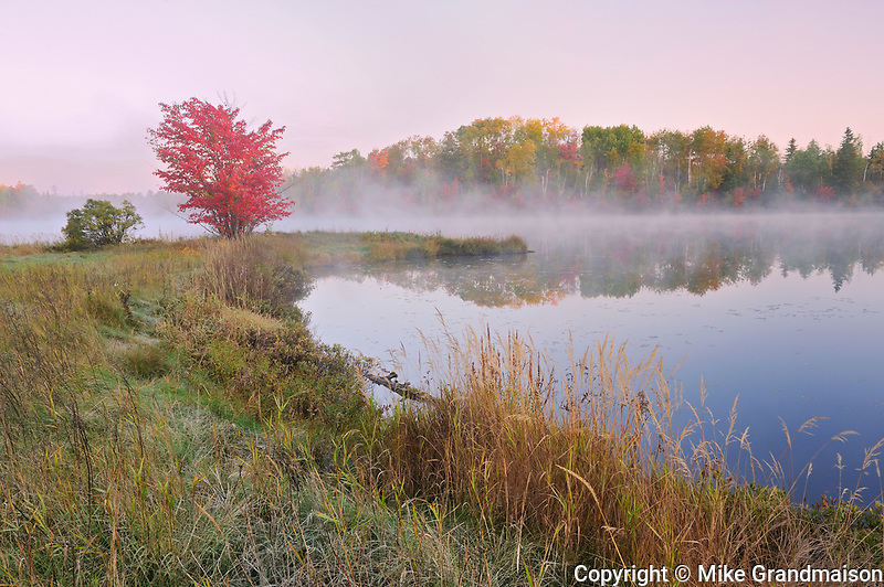 A red maple tree (Acer rubrum) in morning fog on the shore of St. Poithier Lake in autumn color<br />