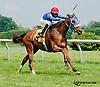 Top Partner winning at Delaware Park on 7/10/13