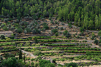 SPAIN Mallorca, Soller, farming in the mountains, orange trees / SPANIEN Mallorca, Soller, Landwirtschaft in den Bergen, Orangen und Oliven werden zunehmend durch Pinien verdraengt