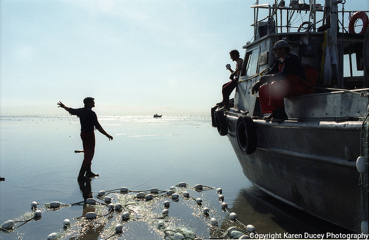 "A fishermen motions to others whose boats have ""gone dry"" or gotten stuck on a sand bar while fishing as the tides receded on the North Line in the Egegik River Fishing District of Bristol Bay, Alaska on June 27, 1998. Bristol Bay is home to the world's largest sockeye salmon fishery.  The commercial salmon drift gillnet fishing fleet is limited to boats no longer than 32 feet in length.  There were over 1,800 permanent entry permits listed in 2002 which each vessel is required to have.  Typicaly bopats fish with two or three deckhands.  Peak of the season is around July 4th in this fishery which lasts about a month. The rivers also get a fair amount of chum, king, and chinook salmon.  Bristol Bay is located in the southwest part of Alaska."
