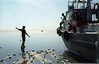 """A fishermen motions to others whose boats have """"gone dry"""" or gotten stuck on a sand bar while fishing as the tides receded on the North Line in the Egegik River Fishing District of Bristol Bay, Alaska on June 27, 1998. Bristol Bay is home to the world's largest sockeye salmon fishery.  The commercial salmon drift gillnet fishing fleet is limited to boats no longer than 32 feet in length.  There were over 1,800 permanent entry permits listed in 2002 which each vessel is required to have.  Typicaly bopats fish with two or three deckhands.  Peak of the season is around July 4th in this fishery which lasts about a month. The rivers also get a fair amount of chum, king, and chinook salmon.  Bristol Bay is located in the southwest part of Alaska."""