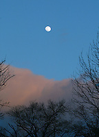 Moonrise over trees in Charlottesville.