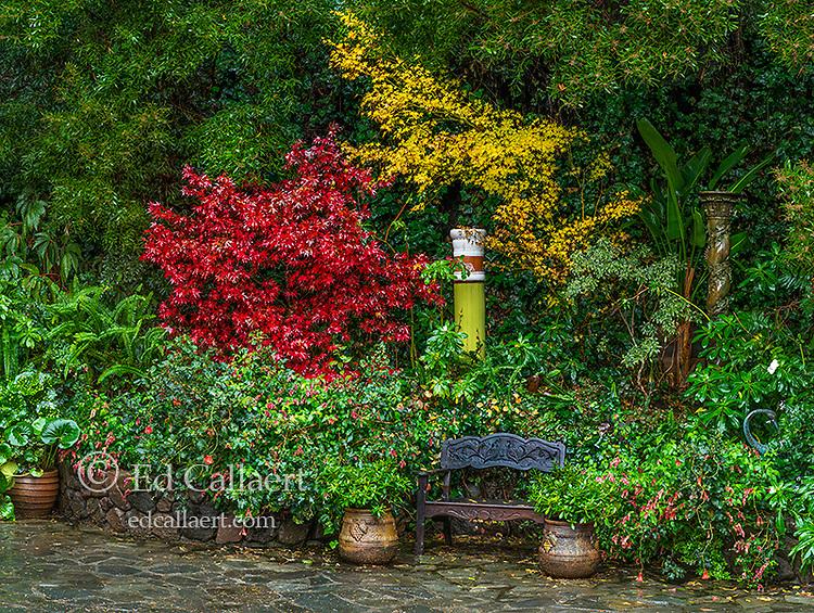 Rock Garden, Cypress Garden, Mill Valley, California