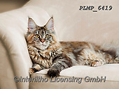 Marek, ANIMALS, REALISTISCHE TIERE, ANIMALES REALISTICOS, cats, photos+++++,PLMP6419,#a#, EVERYDAY