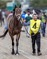 HALLANDALE BEACH, FL - FEB 3:Take Charge Paula #4 trained by Kiaran P. McLaughlin is lead to the paddock before winning the $200,000 Forward Gal Stakes (G3) at Gulfstream Park on February 3, 2018 in Hallandale Beach, Florida. (Photo by Bob Aaron/Eclipse Sportswire/Getty Images)