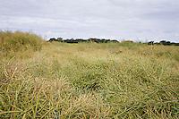 Desiccated oil seed rape - July