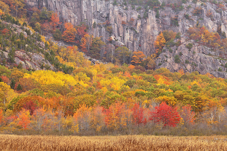 Deciduous trees line the side of Champlain Mountain in autumn on Mount Desert Island, Acadia National Park, Maine, USA