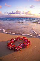 The warm light of Hawaiian sunrise touches the beautiful orchid lei