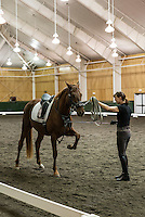 Pineland Farms Equestrian Center, New Gloucester, Maine, USA.