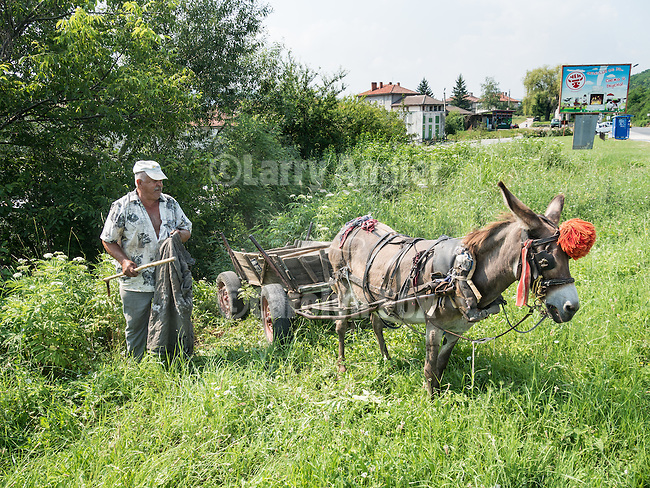 A man with donkey and cart dumps rock and descries along the road in Gabrovo, Bulgaria