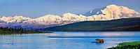 Bull moose feeds in Wonder Lake, snow covered Mt Denali, Denali National Park, Alaska