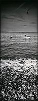 Europe/France/Normandie/Haute-Normandie/76/Seine-Maritime/Yport: Les caïques, canots des pêcheurs - retour de pêche