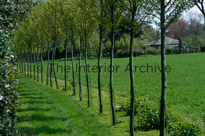 An avenue of young hornbeams leads to the lodge alongside a field which has an old Roman road passing through it
