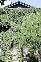plants round the window